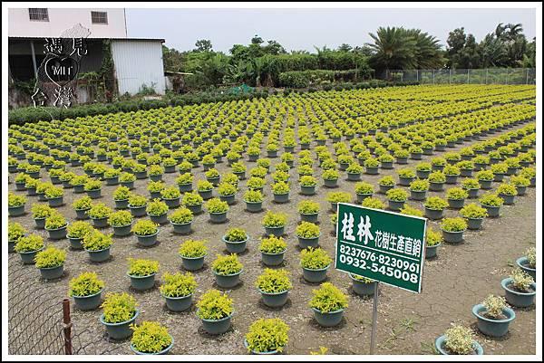 MeetinTaiwan - TenWay Garden 菁芳園30.jpg