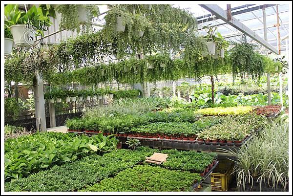 MeetinTaiwan - TenWay Garden 菁芳園31.jpg