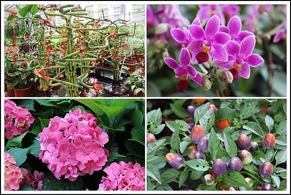 MeetinTaiwan - TenWay Garden 菁芳園33.jpg