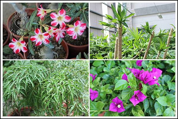 MeetinTaiwan - TenWay Garden 菁芳園35.jpg