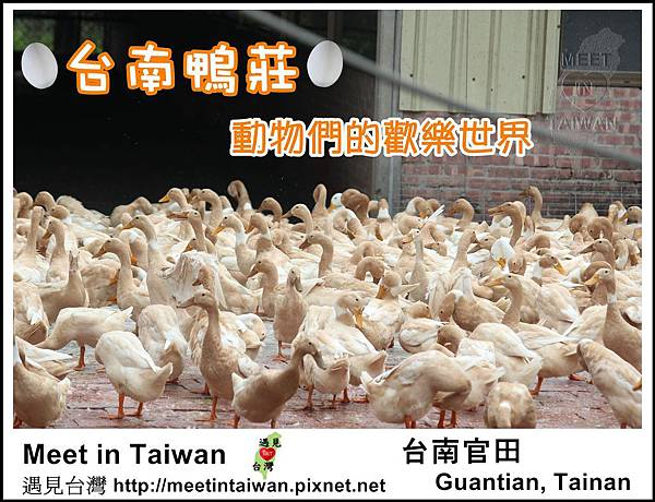 MeetinTaiwan - Duck Farm 台南鴨莊01.jpg