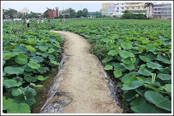 MeetinTaiwan - Lotus in Baihe Tainan 台南白河蓮花季09.jpg
