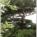 PhotoCap_060.jpg
