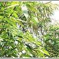 MeetinTaiwan -  Chai Shan 150.jpg