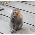 MeetinTaiwan -  Chai Shan 161.jpg