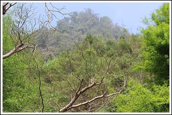 MeetinTaiwan-lunaforest 月光森林 酒桶山 07.jpg