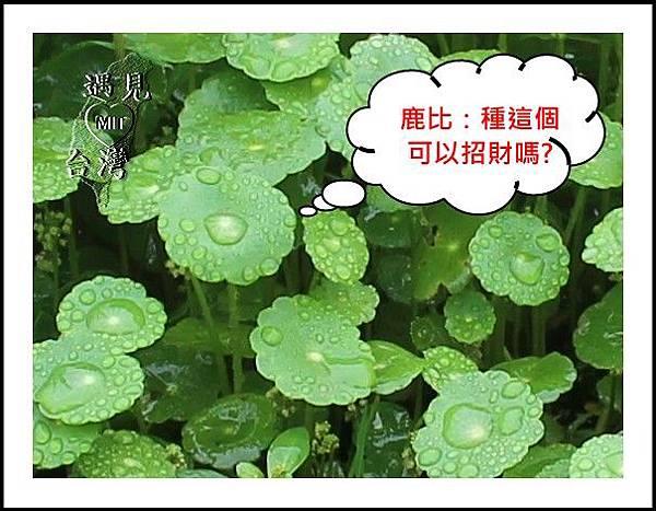 MeetinTaiwan-Sheng De 盛德農莊 17.jpg