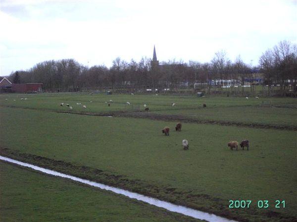 阿姆斯特丹--鄉村景色