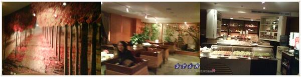 cats-hotel23.jpg