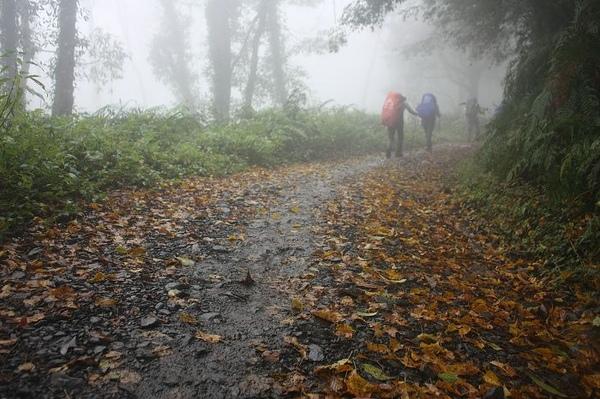 上山就遇到起霧
