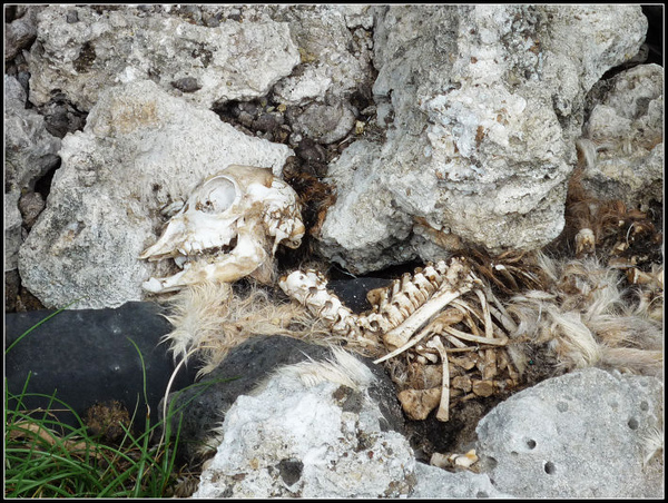 羊的白骨; 好像是不小心跌下去的