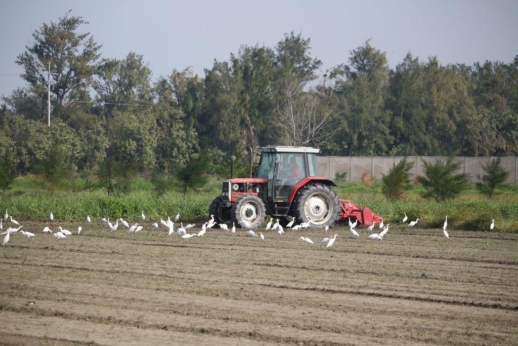 小麥播種-2.JPG