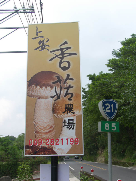 上安香菇03.JPG