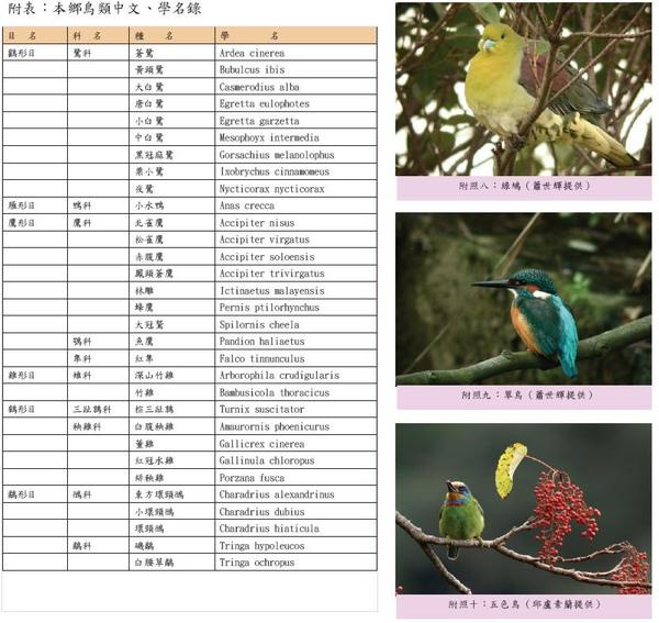 本鄉鳥類中文、學名錄