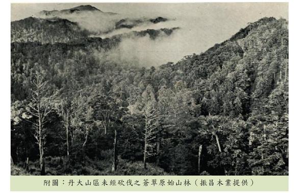 丹大山區未經砍伐之蒼翠原始山林