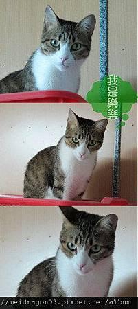 cats1-3.jpg