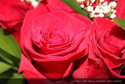 v-day's flower