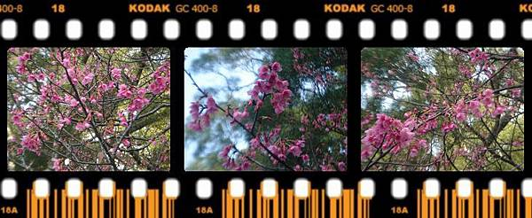 (12)清大梅園12-10.jpg