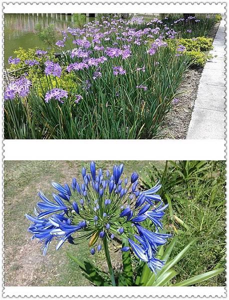 (16)小瑞士花園10-7.jpg