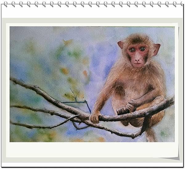 (50)水彩--猴2-1.jpg