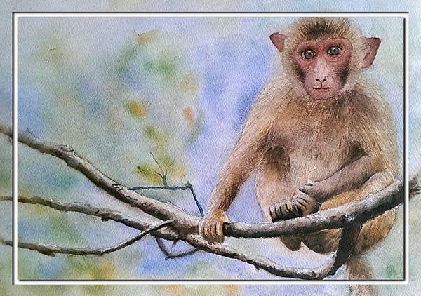 (50)水彩--猴2-2.jpg