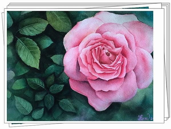 (65)水彩--玫瑰(二)2-1.jpg