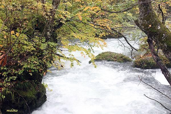 20131023奧入瀨溪流 - 079拷貝.jpg