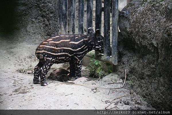 20140618木柵動物園 - 2845.jpg