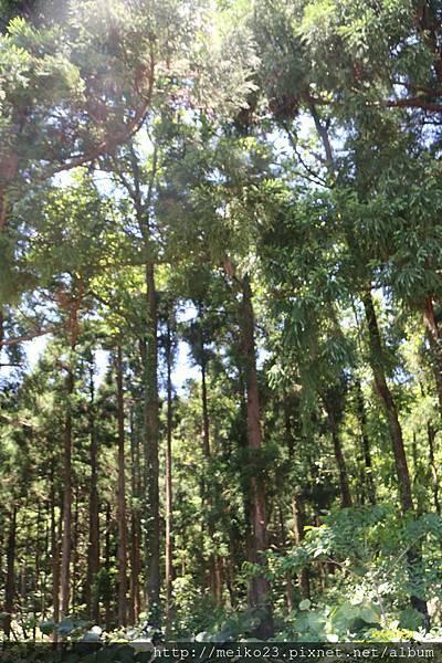 20160602屋久島自然館 - 25拷貝.jpg