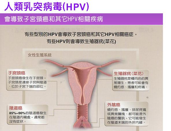 HPV_03