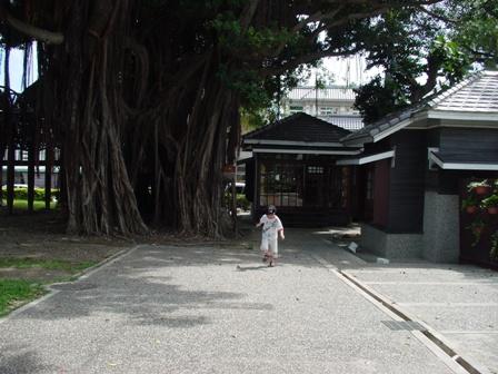 迫不及待的已跑到榕樹下等的攀樹