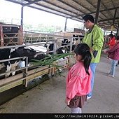 乳牛之家 046