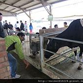 乳牛之家 057