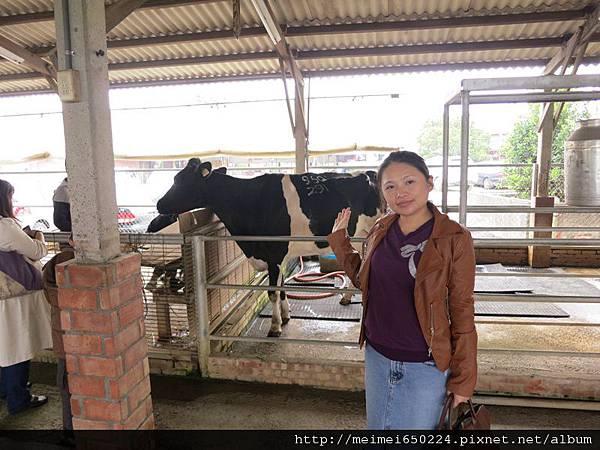 乳牛之家 059