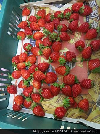 草莓派 065