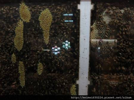 102.04.05蜜蜂故事館 019