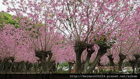 2015.03.22溪湖糖廠&虎尾糖廠 090.jpg