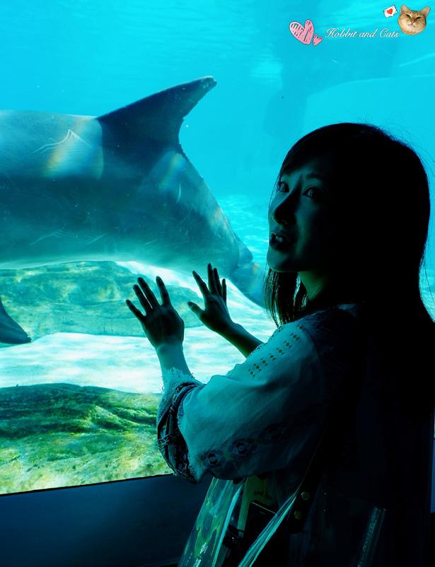新加坡SEA海洋館召喚海豚.jpg