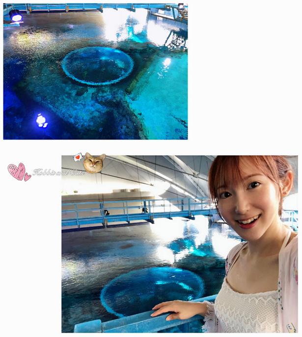 新加坡SEA海洋館海大洋池.jpg