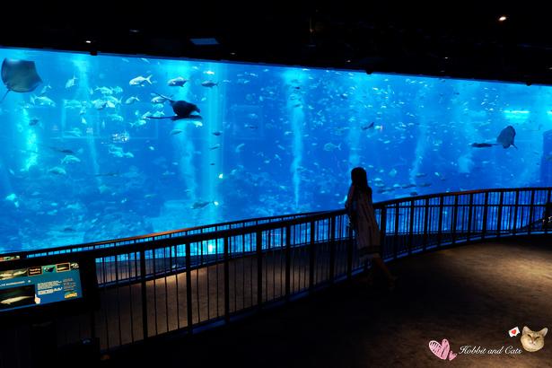 新加坡SEA海洋館海洋館全球最大水族觀景窗.jpg