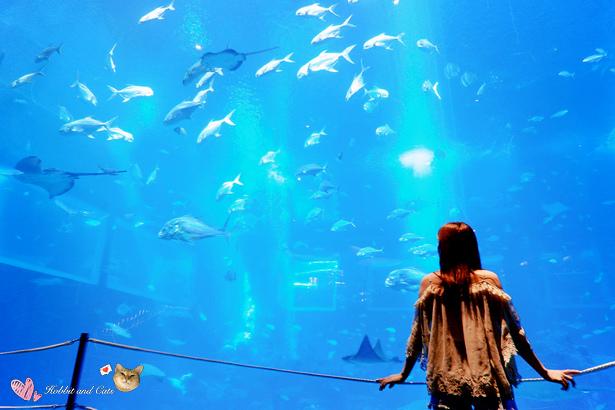 新加坡SEA海洋館海洋觀景窗.jpg