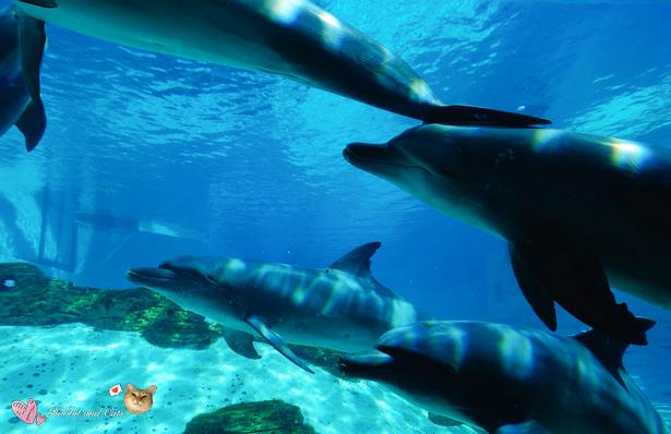 新加坡SEA海洋館海豚.jpg