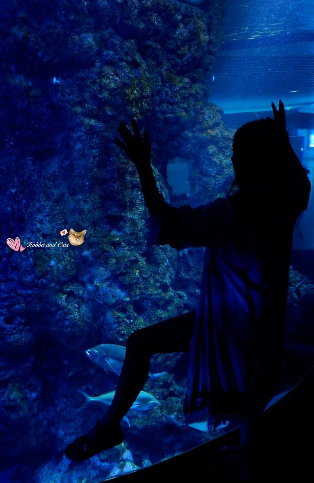 新加坡SEA海洋館魚缸.jpg