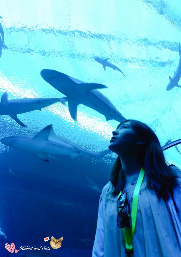 新加坡SEA海洋館鯊魚.jpg