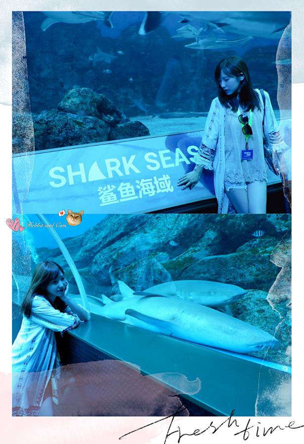 新加坡SEA海洋館鯊魚海域.jpg