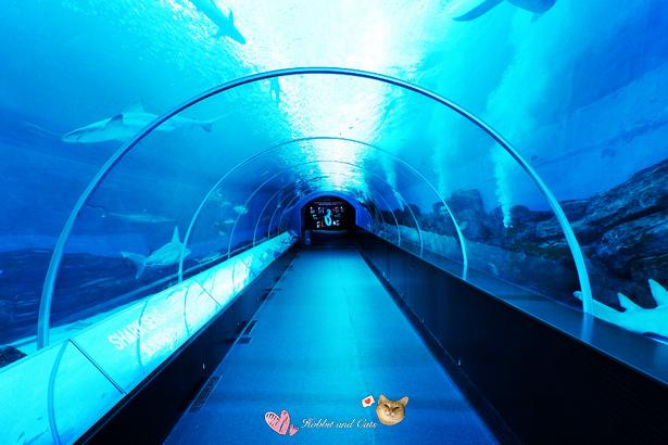 新加坡SEA海洋館鯊魚海域隧道.jpg