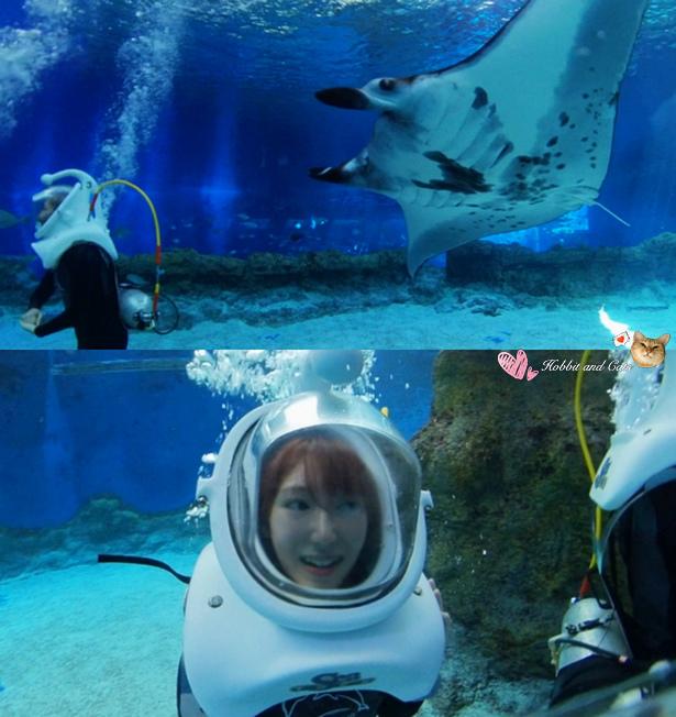 新加坡水上探險樂園海底漫步探險.jpg