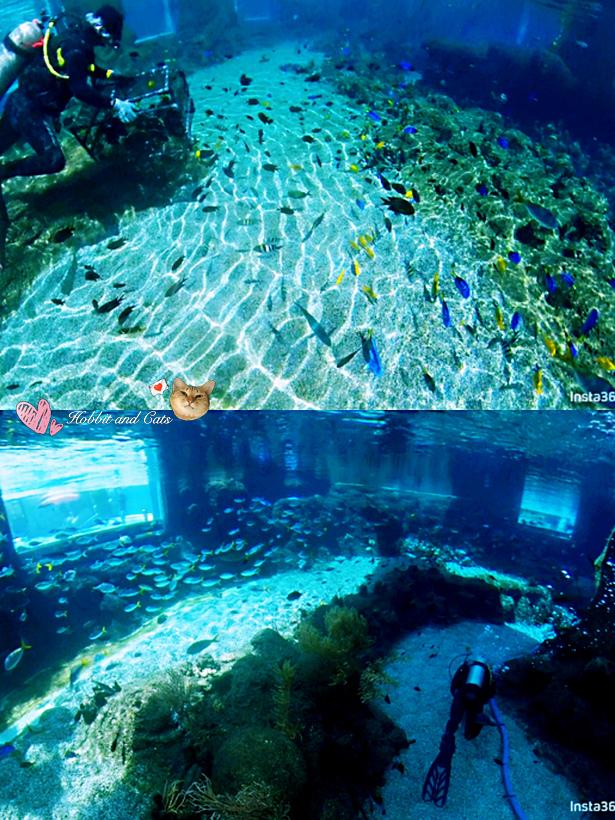 新加坡水上探險樂園彩虹礁游.jpg