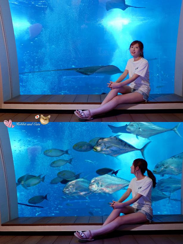 新加坡聖淘沙海景套房ocean suite景觀窗.jpg