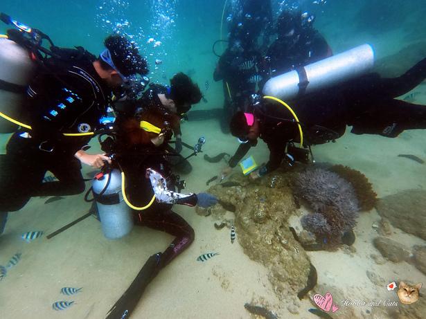 澎湖海洋途徑潛水體驗海洋生態教學.jpg